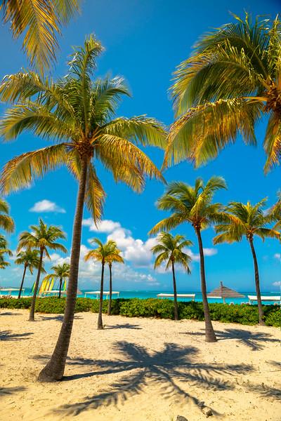 Shadow Palms