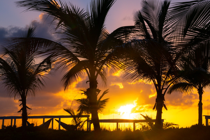 Sunset Glow Silhouetted Against Palm Trees
