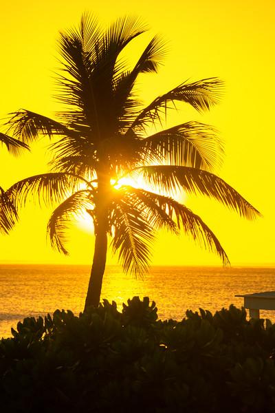 Bursting Through The Palm Tree