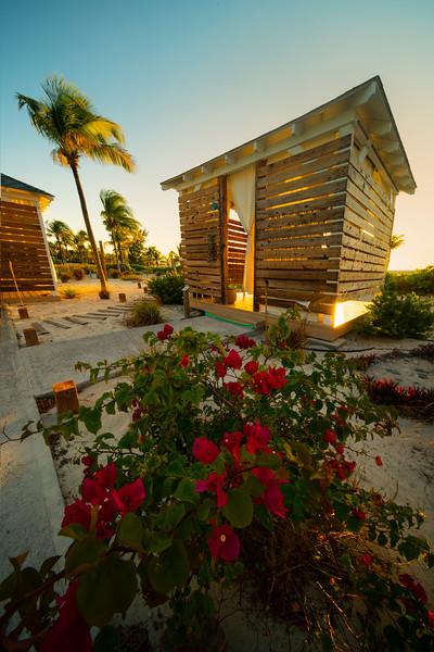 Tropical Garden In Warm Light