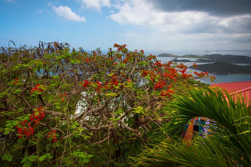 Overlooking The Bay Of St Thomas -  Charlotte Amalie , St. Thomas, US Virgin Islands