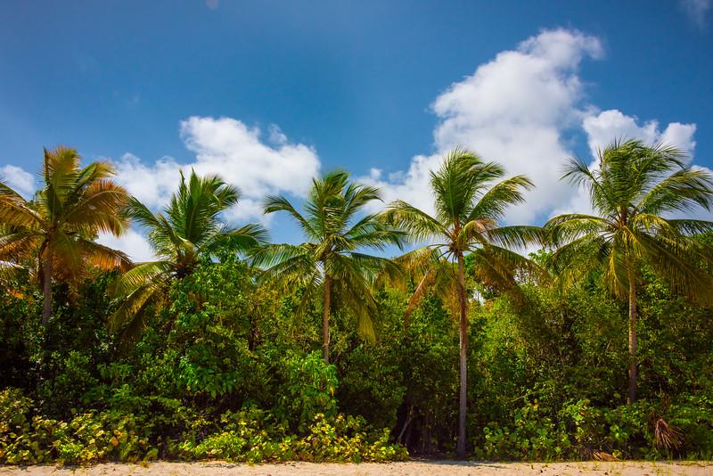 Island Of Palm Trees On St Thomas -  Charlotte Amalie , St. Thomas, US Virgin Islands