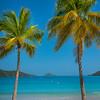 Tropical Palms Framing Island -  Charlotte Amalie , St. Thomas, US Virgin Islands