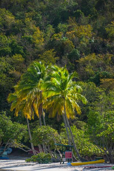 Idyllic Tropical Palms -  Charlotte Amalie , St. Thomas, US Virgin Islands