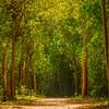A Walk Through The Tropical Forest -  Charlotte Amalie , St. Thomas, US Virgin Islands