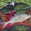 Perch in net with Molix Stick Flex and Z-Man ned rig.