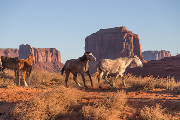 Horse Play in Monument Valley