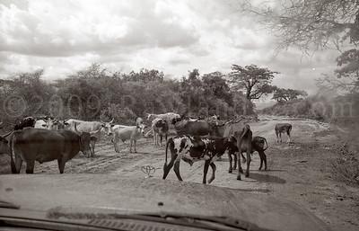 Angola-2008-0994-36