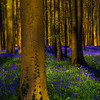 Scattered Light In Hallerbos