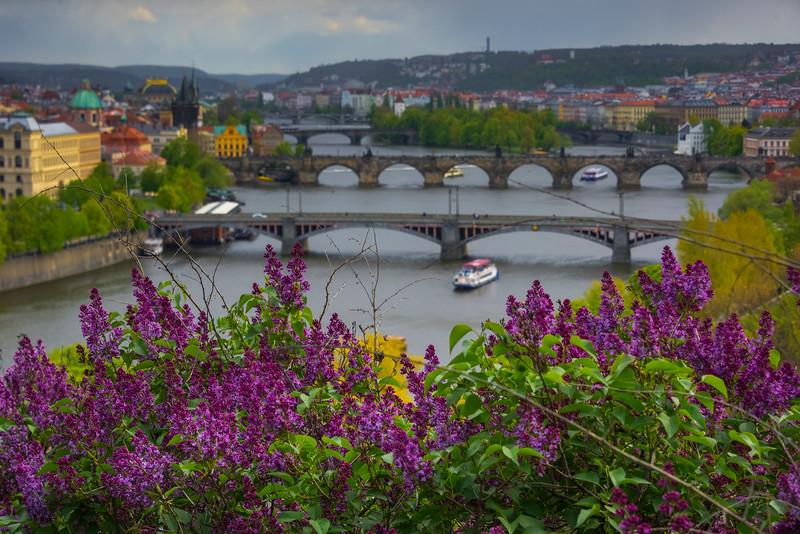 Dressed In Purple Flowers And Bridges