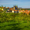 The Old Prague Castle From The Vineyards