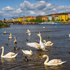 The Color Of Prague And Swimming Swans