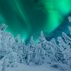 Northern Lights Forest In Finland -Iso-Syote National Park, Finland