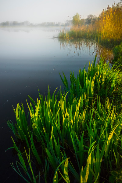 Foliage Early Morning Light On Lake