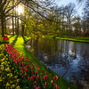 Sunlight Along The Pond Banks