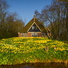 Unique Holland House With Daffodils