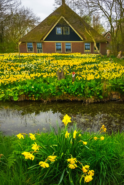The Yellow Daffodil House
