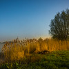 First Morning Light On Lake