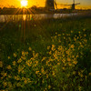Kinderdijk Windmills_14