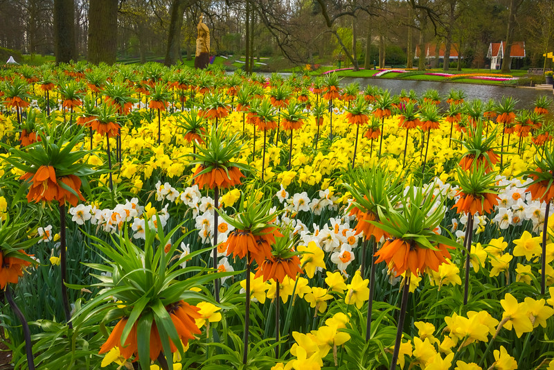 A Sea Of Color Near Pond