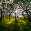 A Slice Of Light - Sligo, Sligo County,  Ireland