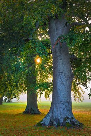 Beginning Of An Autumn Morning - Limerick, Munster, Ireland
