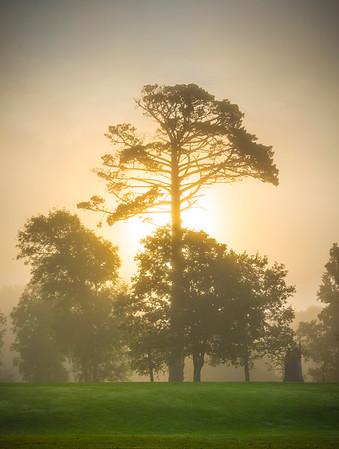 The Start Of A Sunrise Mist Morning - Limerick, Munster, Ireland