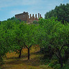 Agrigento_The Valley of the Temples_24