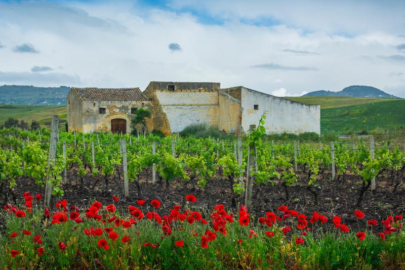 Sicily_Alcamo_19