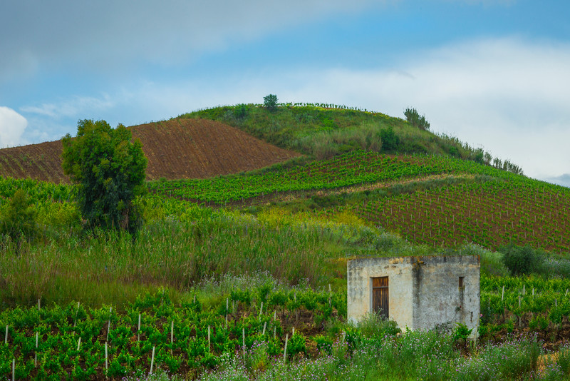 Sicily_Alcamo_16