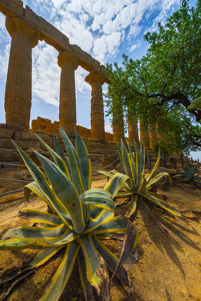 Agrigento_The Valley of the Temples_23