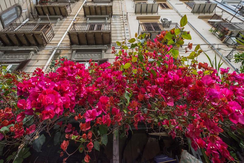 Sicily_Palermo_12