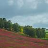 Sicily_Alcamo_3