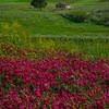 Sicily_Segesta_17