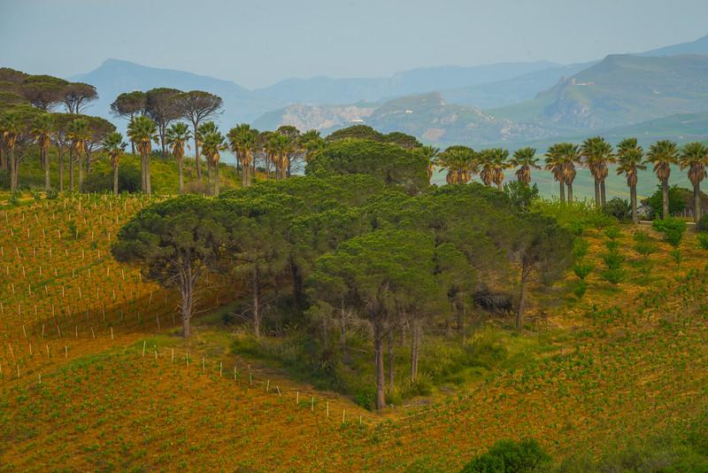 Sicily_Segesta_30