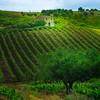 Sicily_Alcamo_27_Cropped