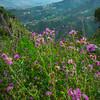 Sicily_Taormina_8