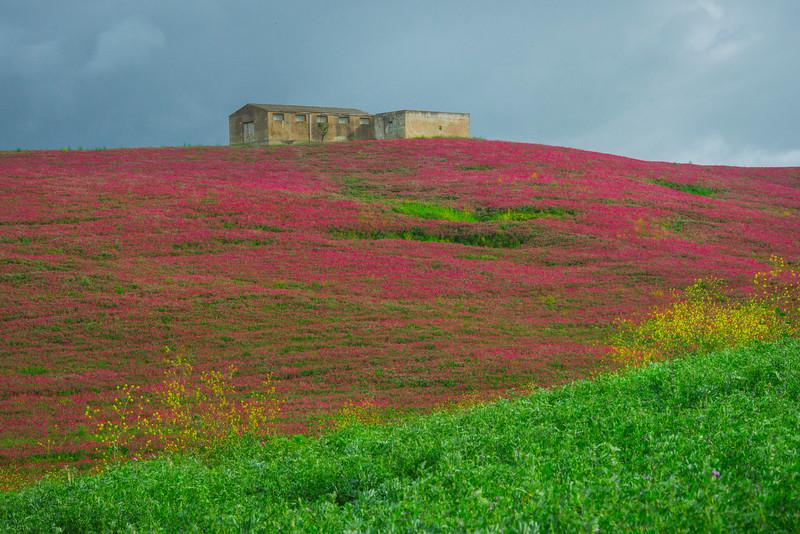 Sicily_Alcamo_2