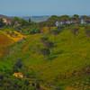 Sicily_Segesta_26