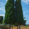 Agrigento_The Valley of the Temples_7