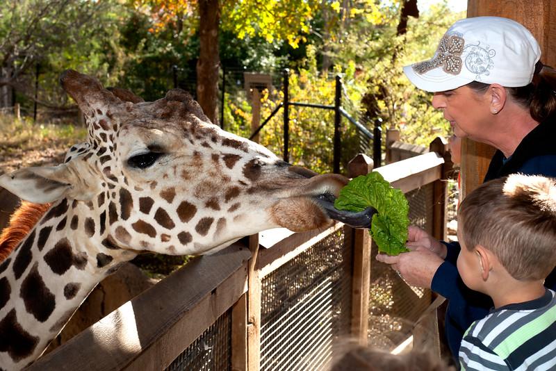 Travis' 4th Birthday at the Dallas Zoo  11-23-2015