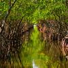 A Canopy Of Green - Everglades National Park, Florida