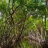 The Canals Of The Everglades_2 - Everglades National Park, Florida