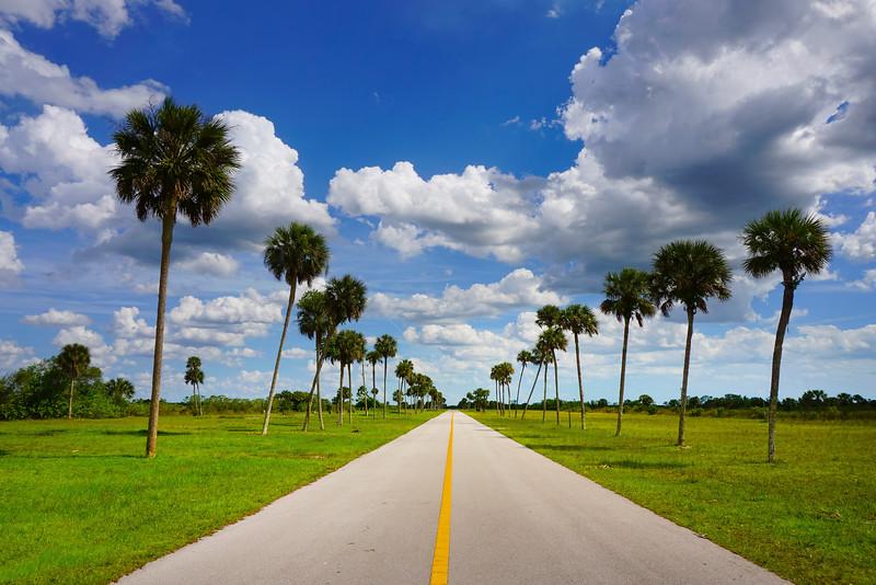 The Road Into The Everglades - Everglades National Park, Florida