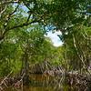 The Intricate Ecosystem Of The Everglades - Everglades National Park, Florida