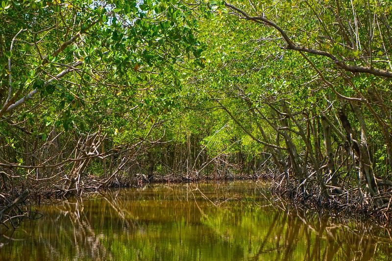Swamp Reflection - Everglades National Park, Florida
