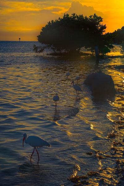 Sunset With The Locals -  Key Largo, Florida Keys, Florida