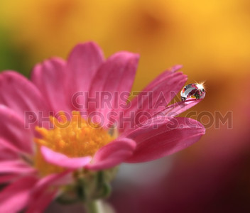 Pink flower with water drop