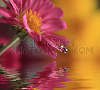Water drop on flower