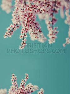 Blue vintage background with flowers
